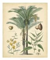 "Fruitful Palm I by Vision Studio - 20"" x 24"""