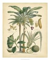 "Fruitful Palm II by Vision Studio - 20"" x 24"""
