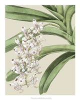 "Orchid Blooms I by Vision Studio - 16"" x 20"""