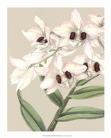 "Orchid Blooms II by Vision Studio - 16"" x 20"""
