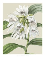 """Orchid Blooms III by Vision Studio - 16"""" x 20"""""""