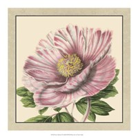 """Peony Collection II by Vision Studio - 18"""" x 18"""", FulcrumGallery.com brand"""