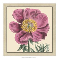 """Peony Collection III by Vision Studio - 18"""" x 18"""", FulcrumGallery.com brand"""