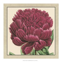 """Peony Collection V by Vision Studio - 18"""" x 18"""""""