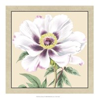 """Peony Collection VI by Vision Studio - 18"""" x 18"""""""