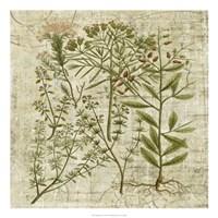 "Garden Verses I by Vision Studio - 22"" x 22"""