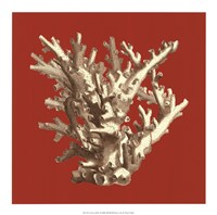 "Coral on Red I by Vision Studio - 17"" x 17"""