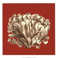 "Coral on Red III by Vision Studio - 17"" x 17"""