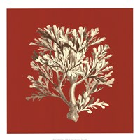 "Coral on Red IV by Vision Studio - 17"" x 17"""