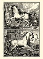 """10"""" x 13"""" Horse Pictures"""