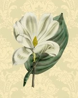 Magnolia with background (A) Fine Art Print