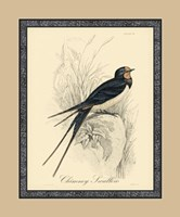 Printed Chimney Swallow (A) Fine Art Print