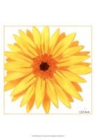 Bright Blossoms IV Framed Print