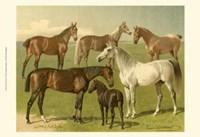 Horse Breeds I Fine Art Print