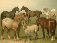 Horse Breeds II Fine Art Print
