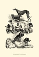 International Show Dogs, 1863  II Fine Art Print