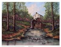 Sycamore Creek Fine Art Print