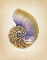 Nautilus Cross Section Fine Art Print