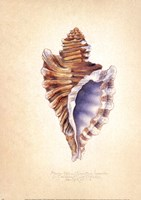 "11"" x 14"" Seashell Art"