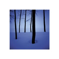 Trees in Snow Fine Art Print