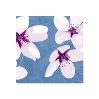Blossom #2 Fine Art Print