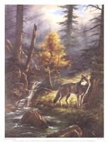 """Timber Wolf by Rudi Reichardt - 13"""" x 17"""""""