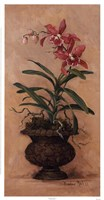 "Orchid Revival l by Barbara Mock - 13"" x 25"" - $19.49"