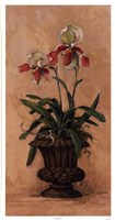 "Orchid Revival ll by Barbara Mock - 13"" x 25"" - $21.99"