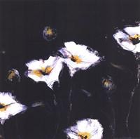 Preening Poppies Fine Art Print
