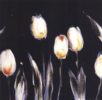 Succulent Tulips Fine Art Print