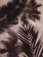 "Palms II by J.B. Hall - 12"" x 16"""