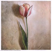 "10"" x 10"" Pink Tulips"