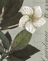 Botanique Bleu III Framed Print