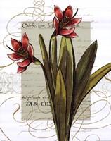 Florilegium III Fine Art Print
