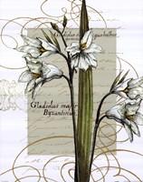 Florilegium IV Fine Art Print