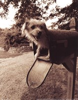 "You've Got Mail by Jim Dratfield - 8"" x 10"", FulcrumGallery.com brand"