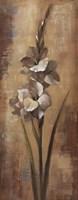 "Floral Grace I by Silvia Vassileva - 8"" x 20"""