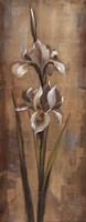 "Floral Grace II by Silvia Vassileva - 8"" x 20"""