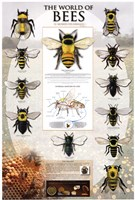 The World Of Bees Fine Art Print
