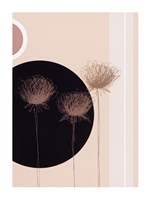 Three Dandelions on black circle Fine Art Print