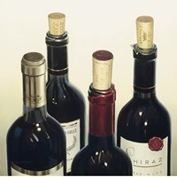 """Cellar Selection by Marco Fabiano - 20"""" x 20"""""""