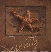 Serenity - starfish Fine Art Print