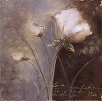 """Magic Garden III by Patricia Pinto - 12"""" x 12"""""""