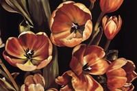 Tulips for Isla Fine Art Print