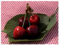 Morello Cherries I Fine Art Print