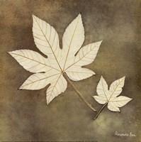 "Maple Leaf by Alexandra Bex - 12"" x 12"", FulcrumGallery.com brand"