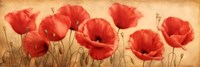 Poppies Grace I Fine Art Print