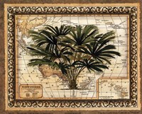 East Indies Palm Fine Art Print