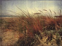Sand Dunes II Fine Art Print