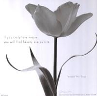 Tulip Beauty Framed Print